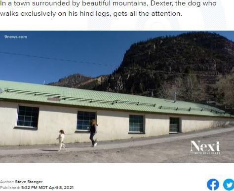 ケンティさんと散歩するデクスター(画像は『9News 2021年4月8日付「After accident, dog adapts by learning to walk on hind legs」』のスクリーンショット)