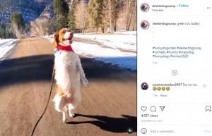 美しい自然の中を走るデクスター(画像は『dexter.the_three_legged_dog 2020年12月22日付Instagram「great run today!」』のスクリーンショット)