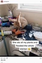 【海外発!Breaking News】留守中にウサギに台所を泥まみれにされた飼い主「ウサギはおとなしいものだと思った」(英)<動画あり>