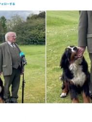 【海外発!Breaking News】アイルランド大統領、生後6か月の子犬に甘噛みされながらも真顔で会見を続ける<動画あり>