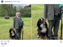 アイルランド大統領、生後6か月の子犬に甘噛みされながらも真顔で会見を続ける<動画あり>