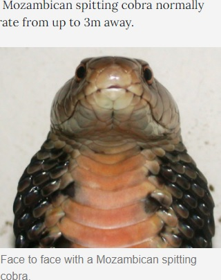 【海外発!Breaking News】サファリツアーで睡眠中、コブラに顔を噛まれた4歳「起きていたら失明していた」(南ア)
