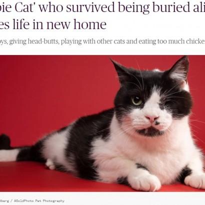 """【海外発!Breaking News】6年前に墓からよみがえった""""ゾンビ猫"""" 左目を失うも元気に過ごす(米)<動画あり>"""