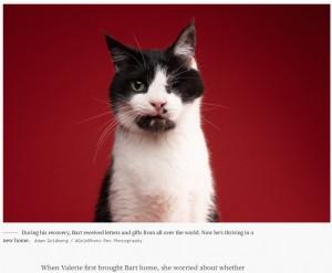 治療を受け、バートは少しずつ回復していった(画像は『TODAY 2021年4月27日付「'Zombie Cat' who survived being buried alive relishes life in new home」(Adam Goldberg / AGoldPhoto Pet Photography)』のスクリーンショット)