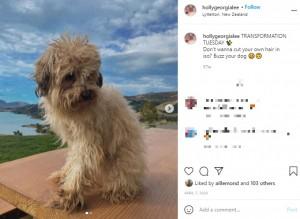 【海外発!Breaking News】飼い犬に起きたDIYトリミングの悲劇「ニワトリ?」「いや、首振り人形でしょう」(ニュージーランド)<動画あり>