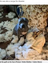 【海外発!Breaking News】留守番中の犬が大暴れ 想像以上の破壊ぶりに飼い主「強盗が入ったのかと」(米)