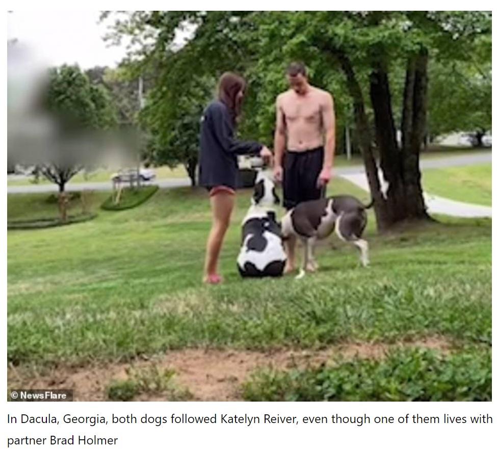 一目散にケイトリンさんの後を追いかけた2匹(画像は『Todayuknews 2021年5月1日付「Pet owners test out a TikTok loyalty challenge on their dogs」(Newsflare)』のスクリーンショット)