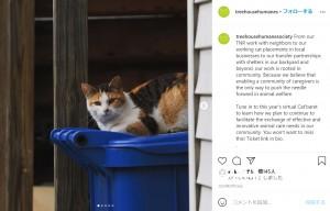 """【海外発!Breaking News】""""ネズミの街""""の新たな対策 1000匹の猫がネズミ退治へ(米)"""