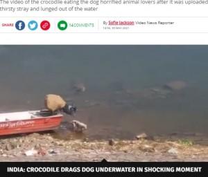 ワニの存在に全く気付いていない犬(画像は『Daily Star 2021年5月30日付「Huge crocodile grabs whimpering dog while it's drinking and drags it to its death」(Image: SWNS)』のスクリーンショット)