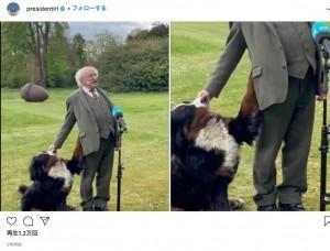 どうしても構って欲しいミスニーチ(画像は『President Michael D. Higgins 2021年5月3日付Instagram「Behind the scenes at Áras an Uachtaráin.」』のスクリーンショット)
