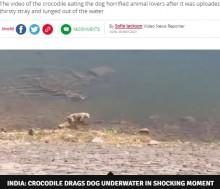 川で水を飲む犬を巨大ワニが襲う 衝撃映像に物議(印)<動画あり>