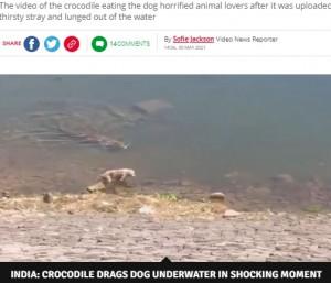 【海外発!Breaking News】川で水を飲む犬を巨大ワニが襲う 衝撃映像に物議(印)<動画あり>