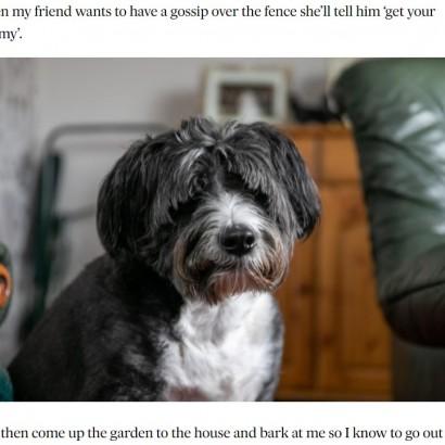 【海外発!Breaking News】大好きなお隣さんの危機に気付いた犬 飼い主に知らせお手柄(スコットランド)