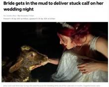 【海外発!Breaking News】結婚式で農家の使命を果たした花嫁 ウエディングドレスのまま牛のお産に立ち会う(豪)
