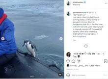 【海外発!Breaking News】ひとりぼっちのペンギン、南極のツアーボートに飛び乗る<動画あり>