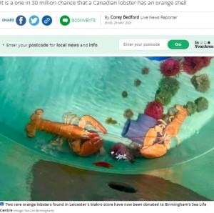 水族館に寄贈された2匹(画像は『Leicester Mercury 2021年5月29日付「Rare orange lobsters given home in Birmingham Sea Life Centre」(Image: Sea Life Birmingham)』のスクリーンショット)