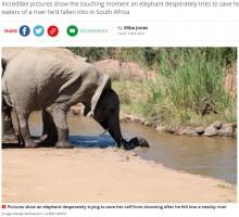 【海外発!Breaking News】溺れる子象を助ける母親と仲間たち 象の群れが見せた美しい共存精神(南ア)