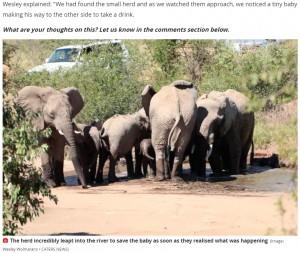 何が起こっているのかを察知しすぐに集まってきた仲間たち(画像は『The Mirror 2021年5月5日付「Elephant desperately tries to save her calf from drowning as he falls into river」(Image: Wesley Wolmarans / CATERS NEWS)』のスクリーンショット)