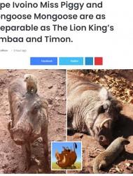 【海外発!Breaking News】『ライオン・キング』さながらの2匹が話題に 親密な関係までそっくり(ボツワナ)