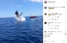 シャチの群れがイルカにロックオン 空中で体当たりの瞬間を激写(メキシコ)<動画あり>