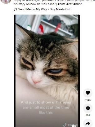 【海外発!Breaking News】ホワイトオパールのような瞳を持つネコ SNSで大人気に(カナダ)<動画あり>
