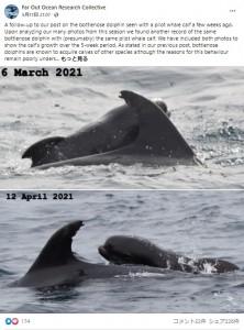 5週間も一緒にいることが判明した2頭(画像は『Far Out Ocean Research Collective 2021年5月17日付Facebook「A follow-up to our post on the bottlenose dolphin seen with a pilot whale calf a few weeks ago.」』のスクリーンショット)