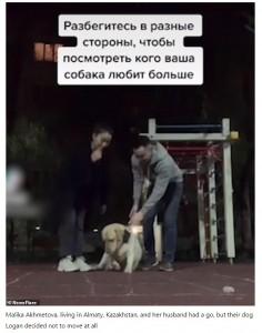 最後のローガンは、マイペースな性格を存分に発揮(画像は『Todayuknews 2021年5月1日付「Pet owners test out a TikTok loyalty challenge on their dogs」(Newsflare)』のスクリーンショット)
