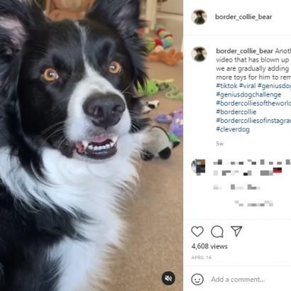 【海外発!Breaking News】60個のぬいぐるみの名前がわかる犬 「僕よりも賢い」の声(英)<動画あり>