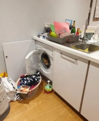 【海外発!Breaking News】帰宅したカップル、洗濯機の中に隠れる可愛いキツネを発見(英)