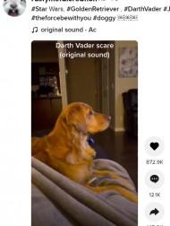 【海外発!Breaking News】初めて見たダース・ベイダーに怯える犬 ルーク役マーク・ハミル「僕も同じことをすればよかったかな?」