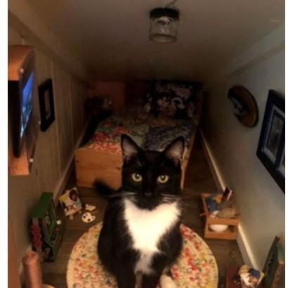 【海外発!Breaking News】愛猫専用のミニチュアハウス 贅沢な空間でテレビっ子に変身(米)