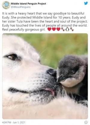 【海外発!Breaking News】10年間ペンギンを天敵から守り続けた牧羊犬が亡くなる 市が記念式典開催へ(豪)