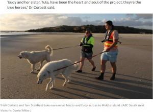 トリッシュ・ コルベットさんらと共にパトロールを行うユーディとトゥーラ(画像は『ABC 2021年6月2日付「Penguin-protecting maremma made famous by Oddball movie dies, public memorial planned」(ABC South West Victoria: Daniel Miles)』のスクリーンショット)