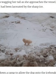 【海外発!Breaking News】砕氷船の船員が見つけたフワフワの生き物 流氷の上を彷徨う犬に驚き(露)<動画あり>