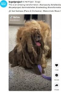 「いったい何の動物?」保護された直後のサイモン(画像は『KC Pet Project 2021年6月16日付TikTok「This is an amazing transformation」』のスクリーンショット)