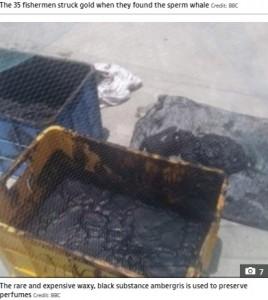 黒いネバネバした龍涎香が見つかる(画像は『The Sun 2021年6月1日付「FLOATING TREASURE Yemeni fishermen find $1.5m of rare 'ambergris' in the belly of a floating sperm whale carcass」(Credit: BBC)』のスクリーンショット)