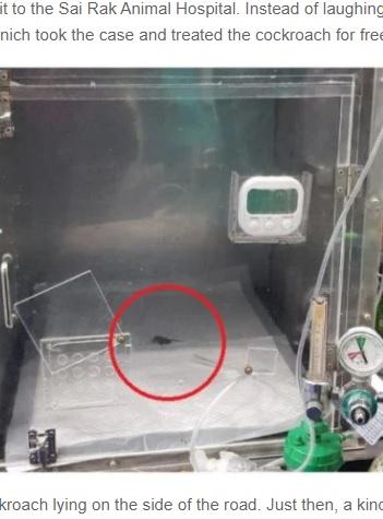 酸素治療を受けるゴキブリ(画像は『Odditycentral 2021年6月2日付「Man Sees Injured Cockroach on the Street, Takes It to the Vet for Emergency Treatment」』のスクリーンショット)