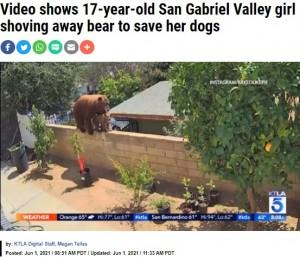 裏庭のブロック塀の上に現れたクマの親子(画像は『KTLA 2021年6月1日付「Video shows 17-year-old San Gabriel Valley girl shoving away bear to save her dogs」(Instagram / Bakedlikepie)』のスクリーンショット)