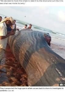 引き上げられたマッコウクジラの死骸(画像は『The Sun 2021年6月1日付「FLOATING TREASURE Yemeni fishermen find $1.5m of rare 'ambergris' in the belly of a floating sperm whale carcass」(Credit: BBC)』のスクリーンショット)