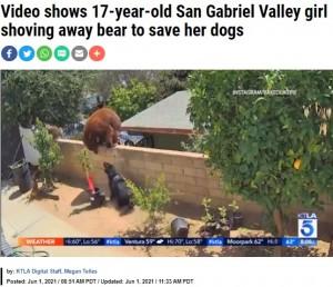 母グマのすぐそばで吠える犬(画像は『KTLA 2021年6月1日付「Video shows 17-year-old San Gabriel Valley girl shoving away bear to save her dogs」(Instagram / Bakedlikepie)』のスクリーンショット)