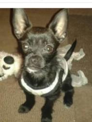 【海外発!Breaking News】火事に気付いた小さな犬、ギャンギャン吠えて就寝中の飼い主2人を救う(英)
