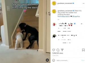 【海外発!Breaking News】階段を上がろうとする1歳児を体を張って阻止 「なんて賢い!」生後5か月の子犬<動画あり>