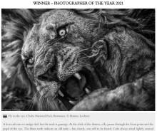 【海外発!Breaking News】ライオンの目をよく見ると…絶妙なタイミングでシャッターを切るプロの凄ワザ