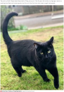 近所に悪事を公表されてしまったエスミー(画像は『Mirror 2021年6月5日付「Pet owner publicly shames 'cat burglar' for stealing neighbours' belongings」(Image: Jam Press/Kate Felmet)』のスクリーンショット)