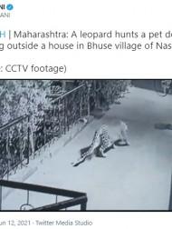 【海外発!Breaking News】民家の玄関先で眠る飼い犬をヒョウが襲撃 その瞬間をカメラが捉えた(印)<動画あり>