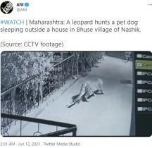 民家の玄関先で眠る飼い犬をヒョウが襲撃 その瞬間をカメラが捉えた(印)<動画あり>