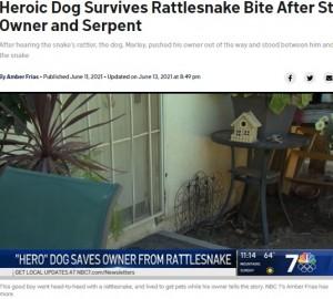 この机の下でヘビがガラガラと音を立てていた(画像は『NBC 7 San Diego 2021年6月13日付「Heroic Dog Survives Rattlesnake Bite After Stepping Between Owner and Serpent」』のスクリーンショット)