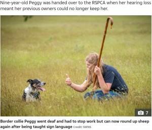 【海外発!Breaking News】聴覚を失った9歳の牧羊犬、ハンドサインを覚えて見事復帰「何かを始めるのに遅すぎることはない」(英)