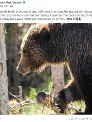 【海外発!Breaking News】「友情が壊れていても友人を犠牲にしないで」 クマと遭遇した時の対処法に笑いの声(米)