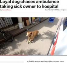 飼い主が乗る救急車を病院まで全速力で追いかけた犬(トルコ)<動画あり>